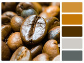 Coffee beans colour palette swatch — Stock Photo