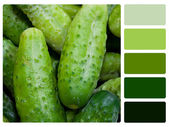 Green cucumbers colour palette swatch — Stock Photo