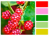Blackberries colour palette swatch — Stock Photo