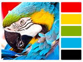 Parrot bird colour palette swatch — Stock Photo