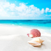 Shell am strand — Stockfoto