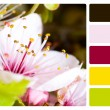 Flower colour palette swatch — Stock Photo