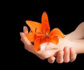 Manos de mujer y flor de lirio — Foto de Stock