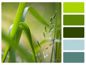 Green grass colour palette swatch — Stock Photo