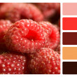 Red Raspberries colour palette swatch — Stock Photo