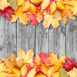 Autumn leaves over wooden background. Copy space. — Stock Photo