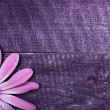 Violet flower on wooden background — Stock Photo