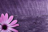 Flor violeta sobre fondo de madera — Foto de Stock