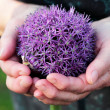 woman's hand holding a round flower ball — Stock Photo