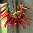 Necklace of red pepper — Stock Photo