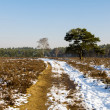 Forest in wintertime — Stockfoto