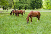 лошадей — Стоковое фото