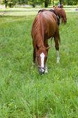 Koně — Stock fotografie