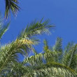 Palm trees on clear blue sky — Stock Video #12659101