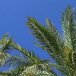 Palm trees on clear blue sky — Stock Video