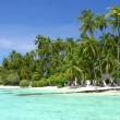 Tropical Paradise at Maldives with palms and blue sky - Stock Photo