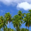 Tropical Paradise at Maldives with palms and blue sky — Stock Video #12778107