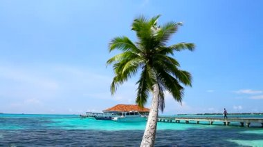 Tropical Paradise at Maldives with palms and blue sky — Stock Video #12777351