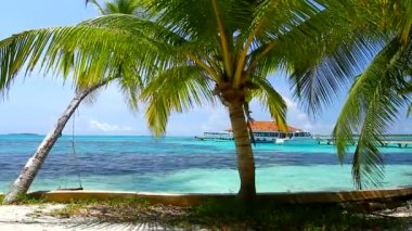 Tropical Paradise at Maldives with palms and blue sky — Stock Video #12777609