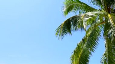 Tropical Paradise at Maldives with palms and blue sky — Stock Video #12778834