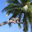 Man is climbing on a palm tree — Stock Video