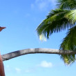 Stock Video: Handsome man is looking around next to palm tree