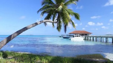 Tropical Paradise at Maldives with palms and blue sky — Stock Video #12780326
