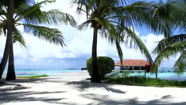 Couple romantique, marchant sur le pont entre les palmiers — Vidéo