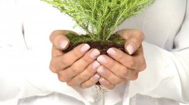 Beautiful young businesswoman is holding tree seedling