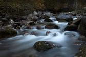 Small creek in wild forest — Stock Photo