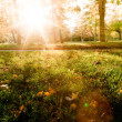 Sunny forest early in the sunset — Stock Photo