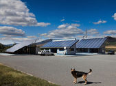 Dog in front of a house with photovoltaic — Zdjęcie stockowe