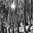 Sun rays in winter forest — Stock Photo #43321939