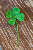 Four-leaf clover symbol of good luck — Stock Photo