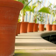 Row of plant pots — Stock Photo