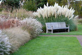 Park Bench with Pampas grass — Stock Photo