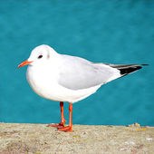 Sea Gull sitting on concrete — Stock Photo