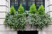 Window Box with small conifers — Stock Photo