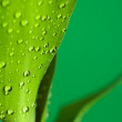 Leaves and drop — Stock Photo #2051794