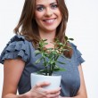 Stock Photo: Womhold houseplant