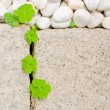 White pebble and leaf — Stock Photo #1808039