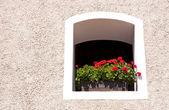 Geranium in the window — Foto de Stock