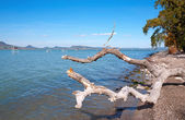 Old bole at Lake Balaton,Hungary — Stock Photo