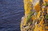 Uccelli sulla scogliera presso l'oceano atlantico, irland — Foto Stock