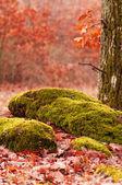 Escena del bosque en otoño — Foto de Stock
