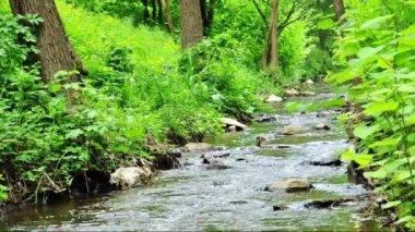 Lilla bäcken i skogen — Stockvideo