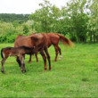 Horse suckling her foal — Stock Video