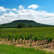 Stock Photo: Vineyard at Lake Balaton, Hungary