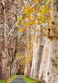 ハンガリー バラトン湖の秋をプロムナードします。 — ストック写真