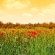 Green meadow in sunrise — Stock Photo